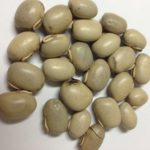 Mucuna Seeds 2