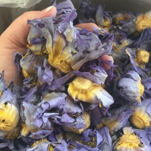 fresh premium blue lotus petals
