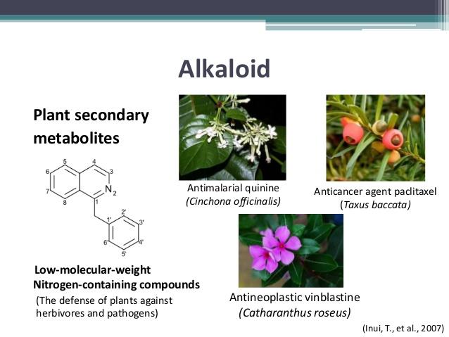 alkaloids herbalism