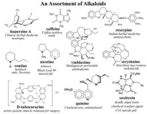 plant alkaloids herbalism